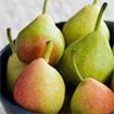 A Bartlett Pear