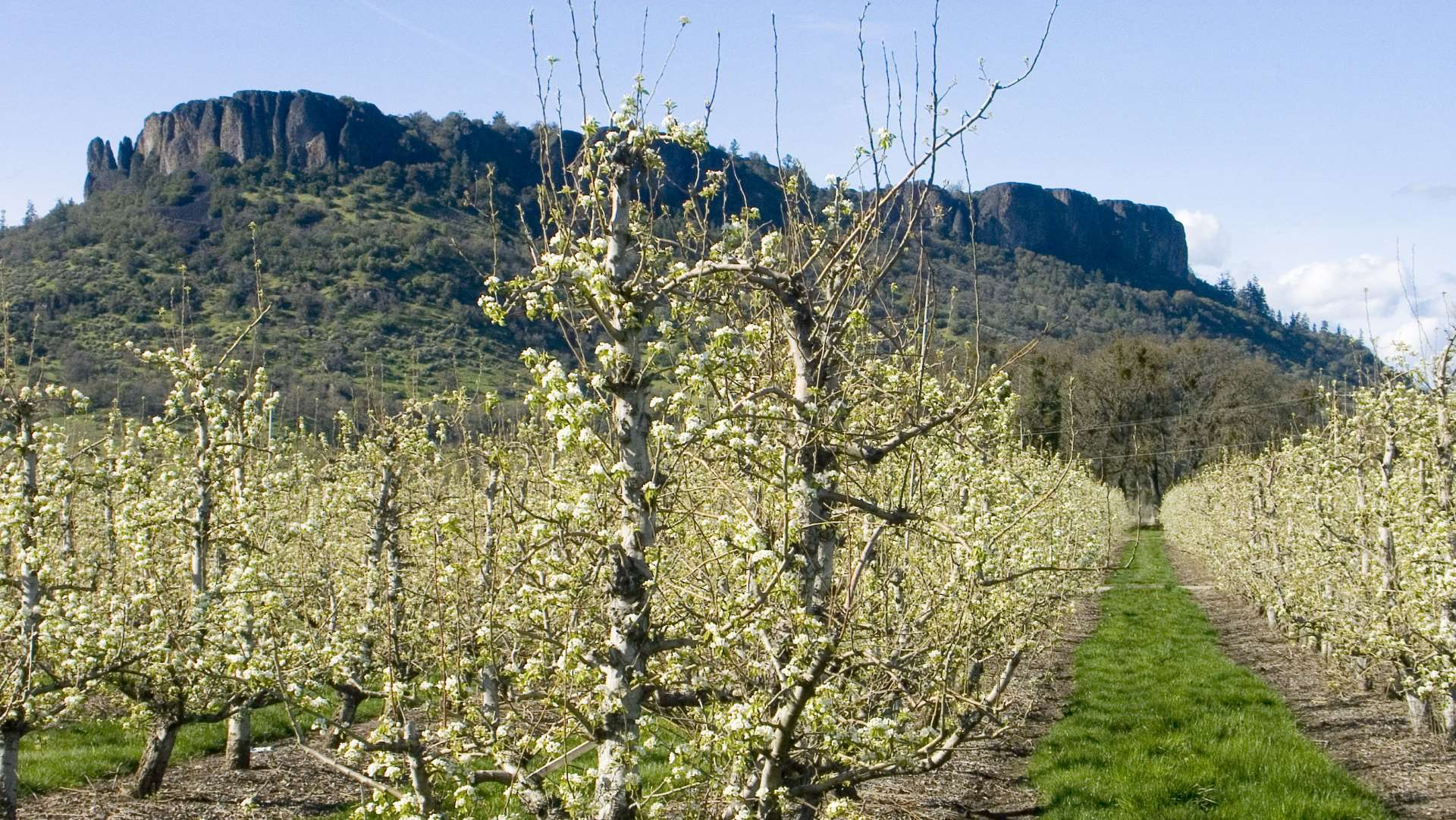 Naumes grows, packs, and delivers premium pears grown right here in the Pacific Northwest.