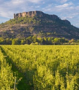 Pear orchard and Table Rock